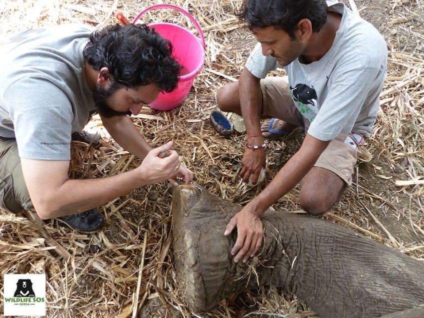 Na szczęście słonie zachowywały spokój, tak jakby wiedziały, że całe...