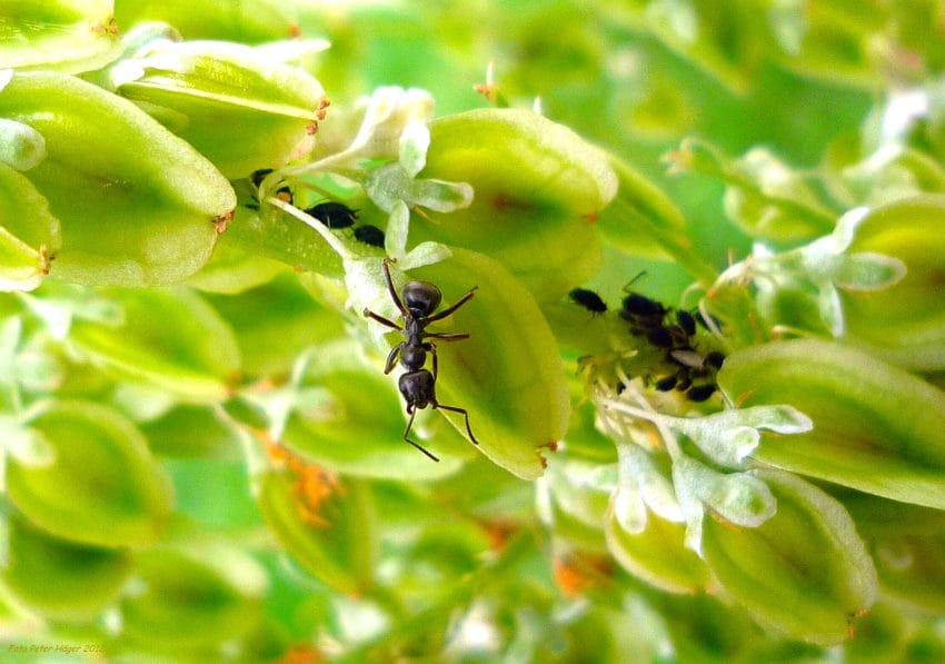 <b>9. Mrówki zastygają w bezruchu</b><br><br> Według raportu CNN, mrówki...
