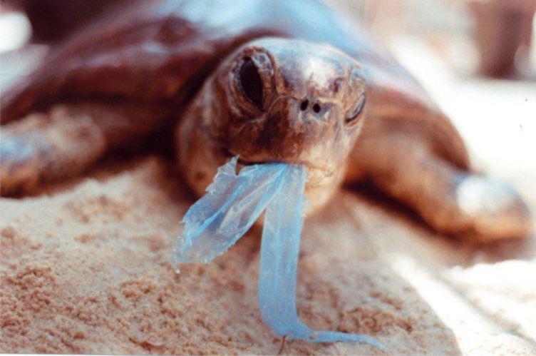 9. Każdy zjedzony kawałek plastiku to krok bliżej do śmierci zwierzęcia. <br><br