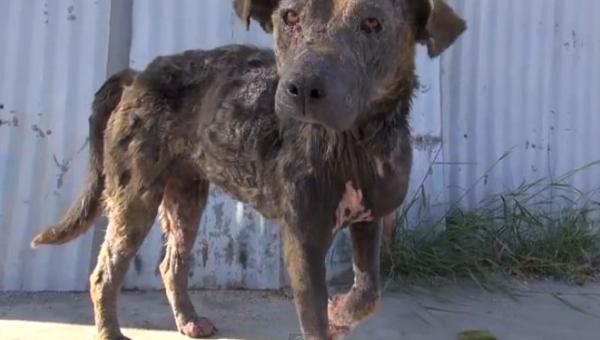 Uratowali chorego bezdomnego psa, piękna historia. Udostępnij dalej.