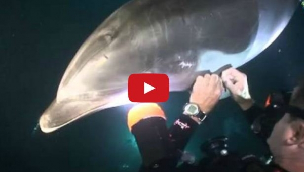 Podczas nurkowania zobaczył, że delfin mu coś pokazuje. Całe szczęście w porę...