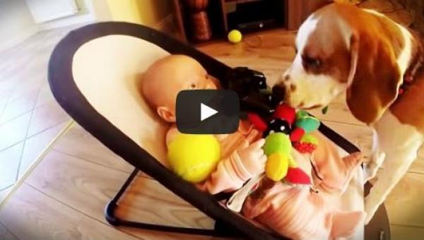 Pies ukradł dziecku zabawkę, potem poczuł się winny i przeprosił w...