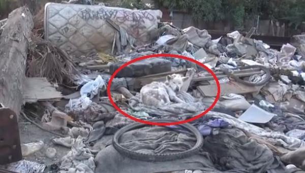 Znaleźli psa na wysypisku, postanowili mu pomóc i wtedy stał się cud!...