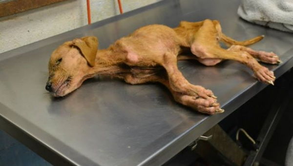 Ten pies został uratowany przez pewną rodzinę, nie spodziewali się że...