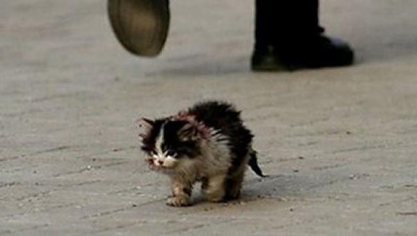 Wszyscy ludzie bali się dotknąć tego kota, wtedy on go wziął na ręce i stało...