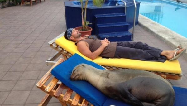 Ten lew morski był ciężko ranny, gdy doszedł do hotelu zaopiekowali się nim...