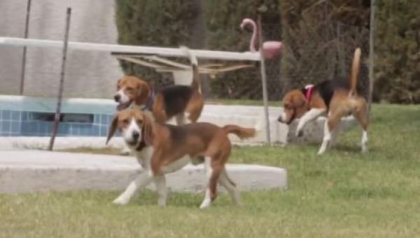 9 psów całe życie żyło w klatce, teraz zostały wypuszczone, zobacz ich reakcję