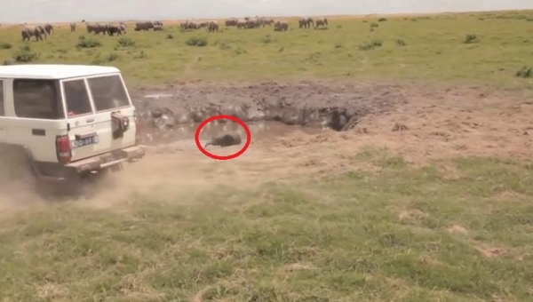Często w tarapatach znajdują się psy, koty, jelenie czy konie, ale... słonie?...