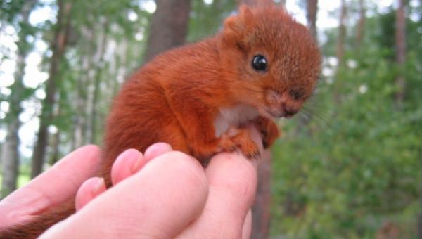 Rodzina znalazła ranną wiewiórkę, to zrobili potem jest bardzo urocze!