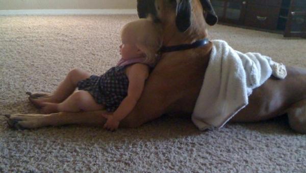23 psy, które są najlepszymi przyjaciółmi dziecka. Urocze!!!