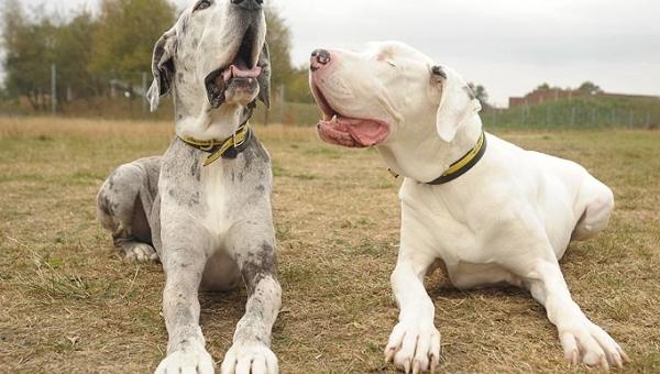 Wyglądają jak dwa zwyczajne psy, ale gdy przyjrzałam się bliżej......