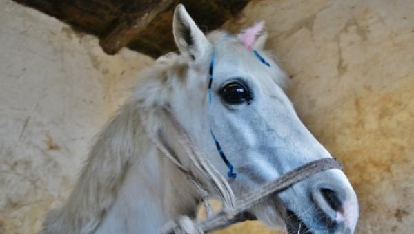 Dziewczynka dostała na komunię konia. Jednak koniec tej historii doprowadził...