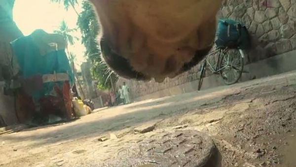 Film nagrany kamerą umieszczoną na obroży bezdomnego psa. Koniec mnie rozwalił.