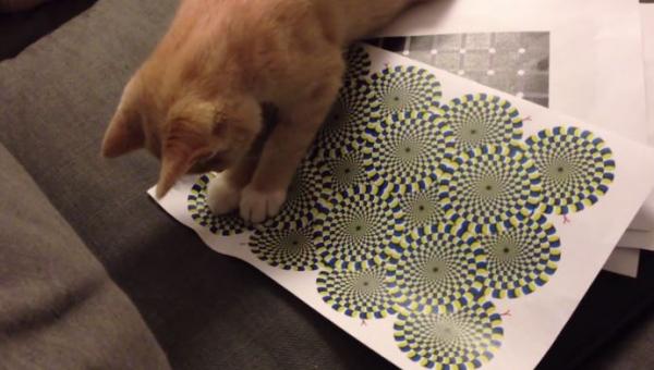 Kociak dał się nabrać widząc ten dziwny rysunek... Pewnie nie on jeden :)
