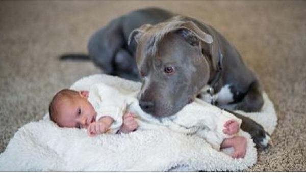 Bał się że pies jego żony skrzywdzi jego córeczkę, to co stało się potem...