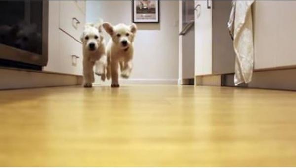 Nagrywali swoje psy od 11 tygodnia do 11 miesiąca życia. Zmienia się...