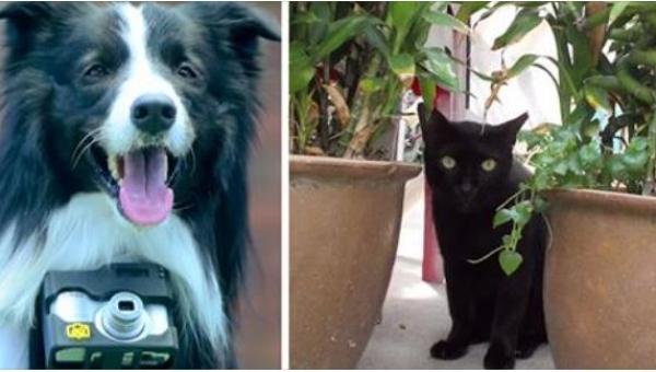 Zawiesili psu aparat fotograficzny wyposażony w specjalny czujnik. Dzięki...
