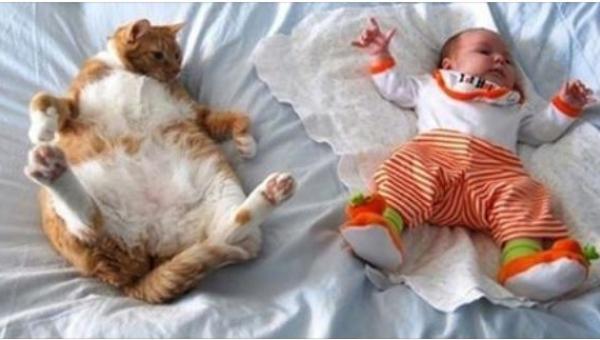 Czy jest coś, w czym jesteśmy lepsi od kotów? Ich zdaniem nie... Zobaczcie...