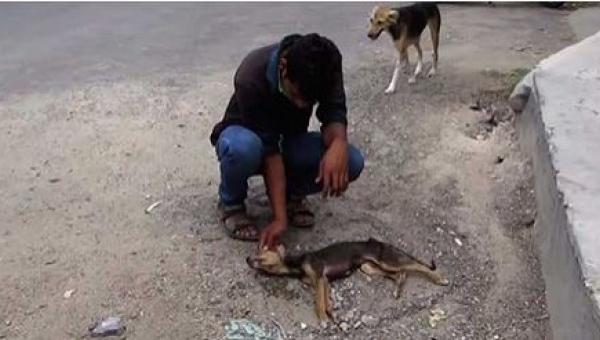 Pies umierał na środki drogi, a gdy zbliżyli się, by mu pomóc, zrobił coś...