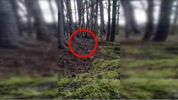 To, co zobaczyli w środku lasu, przeczy prawom logiki!