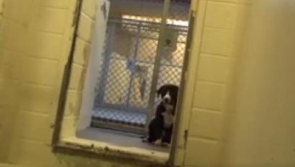 Reakcja psa który właśnie uświadomił sobie że został adoptowany... BEZCENNA!