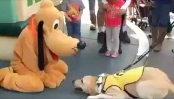 Gdy pies przewodnik zobaczył swojego idola z kreskówki, oszalał z radości!