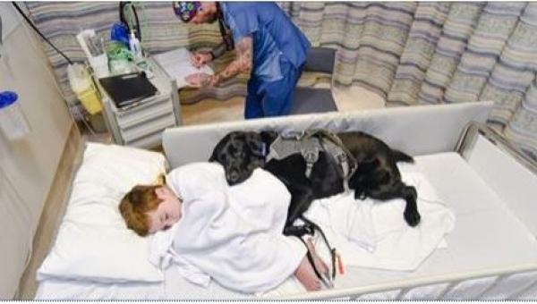 Mahe to pierwszy pies, któremu zezwolono na TO! A wszystko dlatego, że jego...