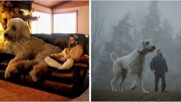 Ten fotograf przedstawia swojego psa w nietypowy sposób... Poznajcie psa -...