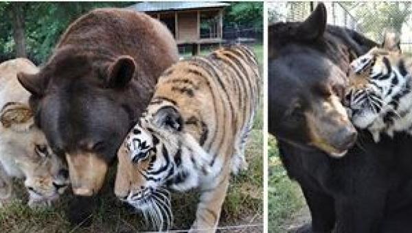 Te dzikie zwierzęta przeszły przez coś strasznego... Nigdy nie uwierzycie w...