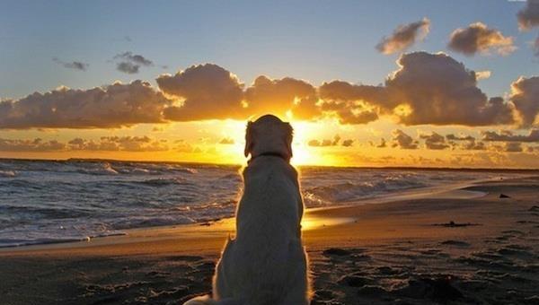 Psy nigdy nie umierają. One śpią w twoim sercu. Każdy miłośnik zwierząt...