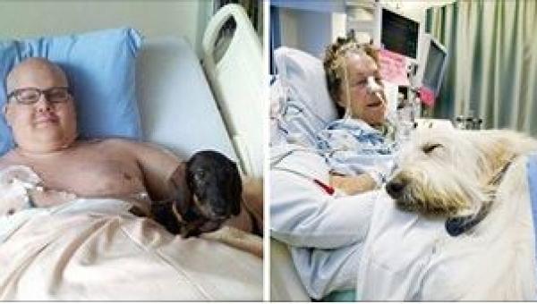 Gdy psy zobaczyły swoich chorych właścicieli, emocjom nie było końca! Trudno...