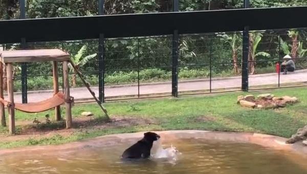 Niedźwiedź przez wiele lat żył w ciasnej klatce, zobacz co zrobił gdy...