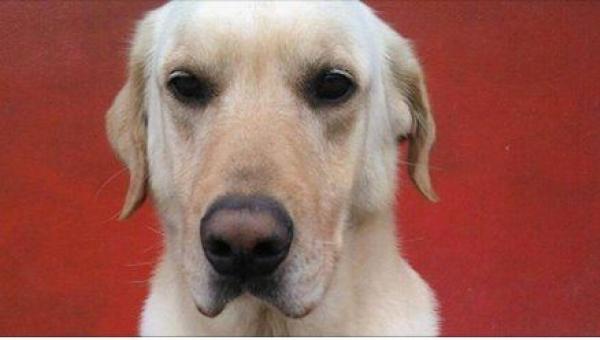 Gdy zobaczyłam, jak chowają 4-letniego labradora, nie mogłam przestać płakać....