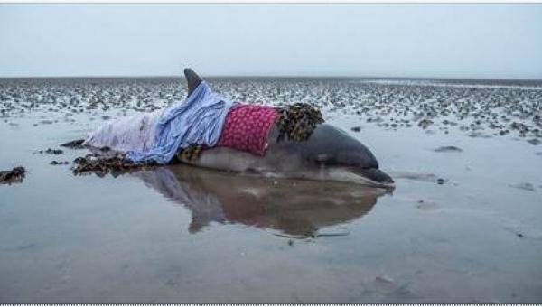 Zobaczcie dramatyczną akcję ratunkową: para odnalazła na plaży delfina!