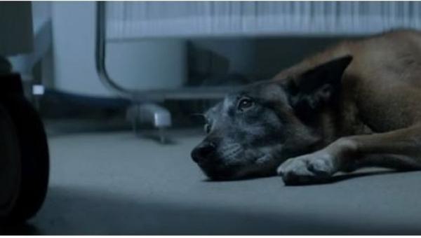 Pies położył się obok łóżka walczącego o życie pana, ale dopiero gdy dowiecie...