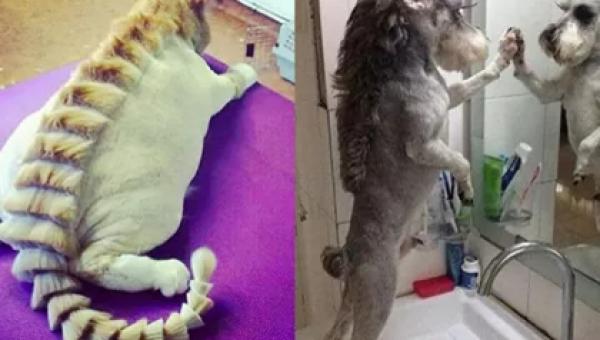 30 zwierzaków, które wpadły pod kosiarkę... to znaczy były u fryzjera :)...