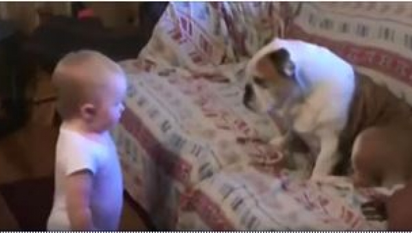 Dziecko zbliżyło się do buldoga. To, co pies zrobił w 31 sekundzie nagrania,...