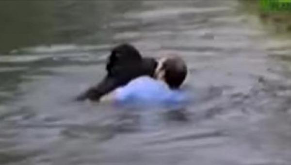 Mężczyzna wskoczył od fosy by ratować tonącego szympansa. Zobaczcie tego...