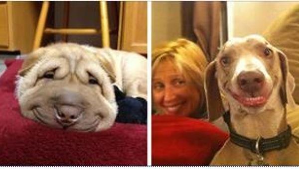 25 psów z najlepszymi uśmiechami, jakie kiedykolwiek widzieliście! Numer 7...