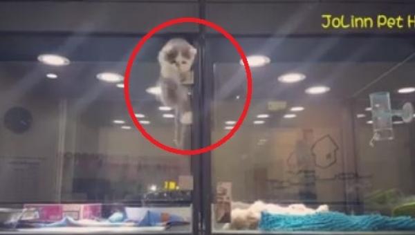 Kamera nagrała kotka na próbie ucieczki, ale... Zobaczcie, gdzie i do kogo mu...