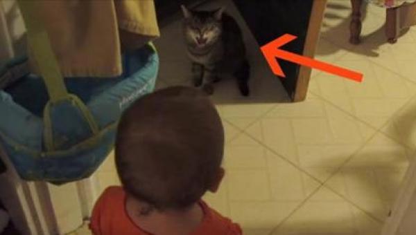 Mama nagrała jak jej dziecko rozmawia z kotem. Reakcja kota w 0:10? Bezcenna!