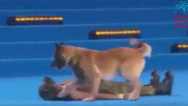 Ten pies zadziwił wszystkich,gdy podbiegł do nieruchomo leżącej kobiety. To...