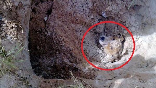 Ten pies został pogrzebany żywcem. Nie uwierzycie, kto zlecił zrobienie...