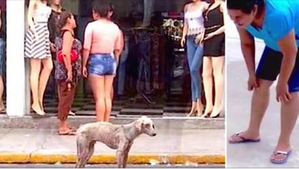Miały iść na zakupy, gdy przed wejściem do sklepu zobaczyły tego psa... To,...