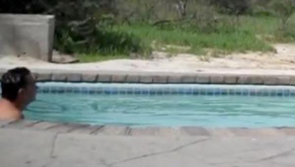 Chciał schłodzić się w basenie. To co wyszło z krzaków i do niego dołączyło,...