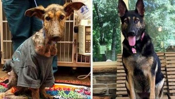 To, co robił ten pies, gdy go znaleźli na ulicy, jest przerażające!