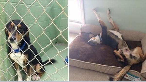 16 zdjęć zwierząt przed i po adopcji. Różnica jest tak niesamowita, że aż...