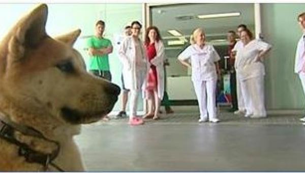 Ten pies postanowił nie ruszać się spod szpitala dopóki nie wyjdzie z niego...