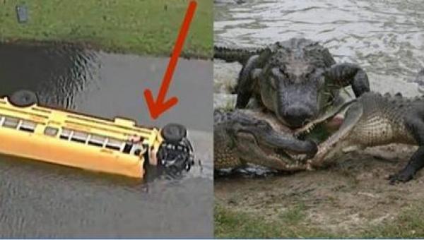 Autobus wiozący 27 dzieci wpadł do jeziora pełnego aligatorów, ale jeden...