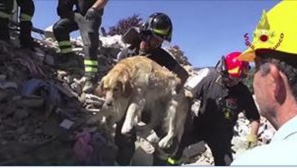 Poznajcie historię psa o imieniu Romeo uratowanego 10 dni po trzęsieniu ziemi...